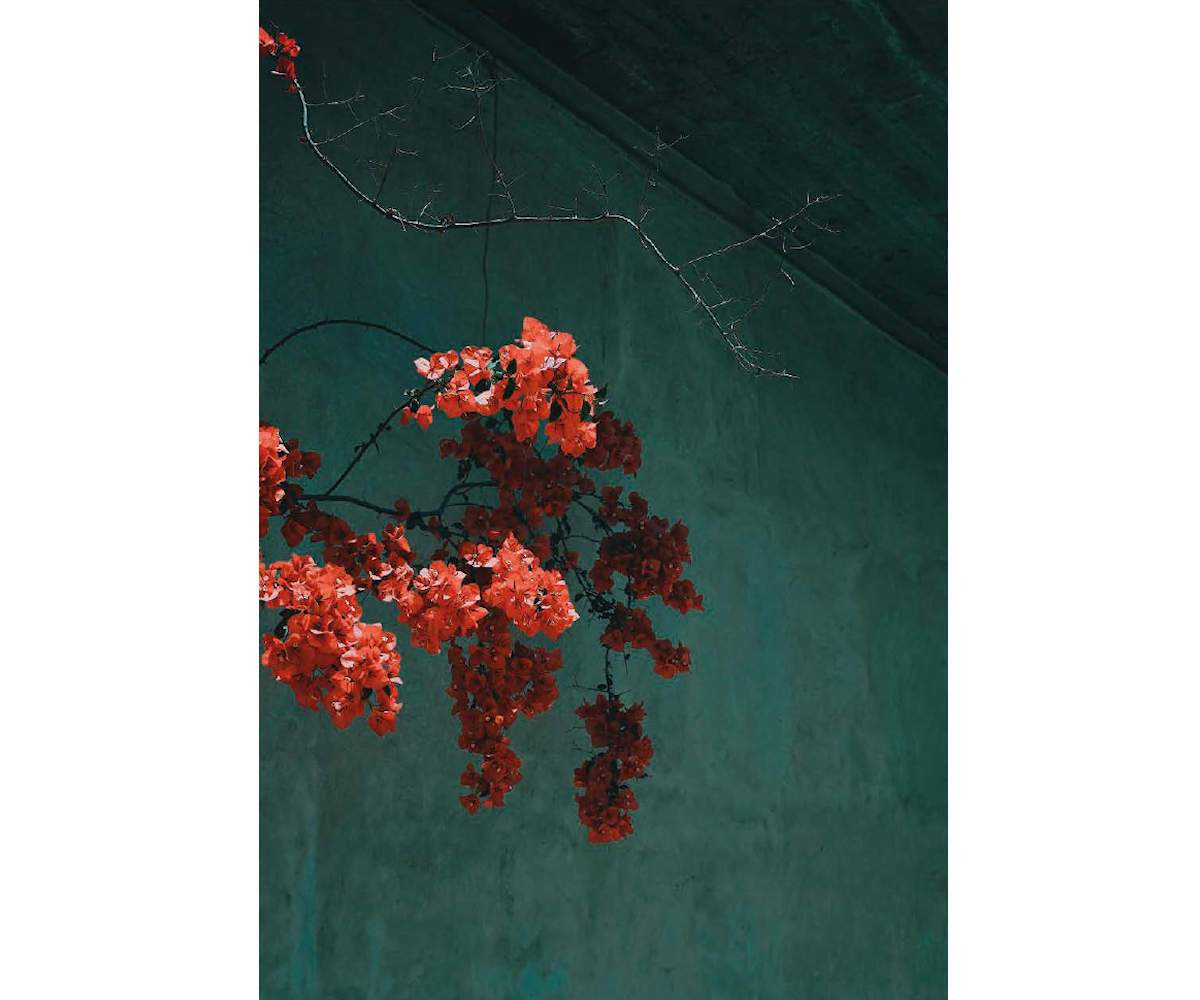 Bougainvillea, Greece, 2019, Archival Pigment print on Photo Rag, 50 x 40 cm, Edition 7 & 2 AP, ©Sandro Diener, Courtesy Bildhalle