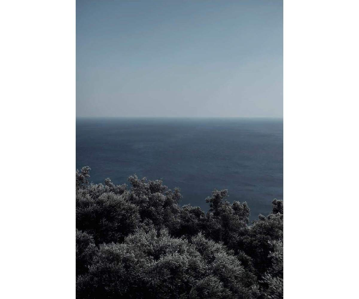 Olive forest, Greece, 2019, Archival Pigment print on Photo Rag, 180 x 120 cm, Edition 3 & 2 AP, also available: 40 x 50 cm, Edition 7 & 2 AP, ©Sandro Diener, Courtesy Bildhalle