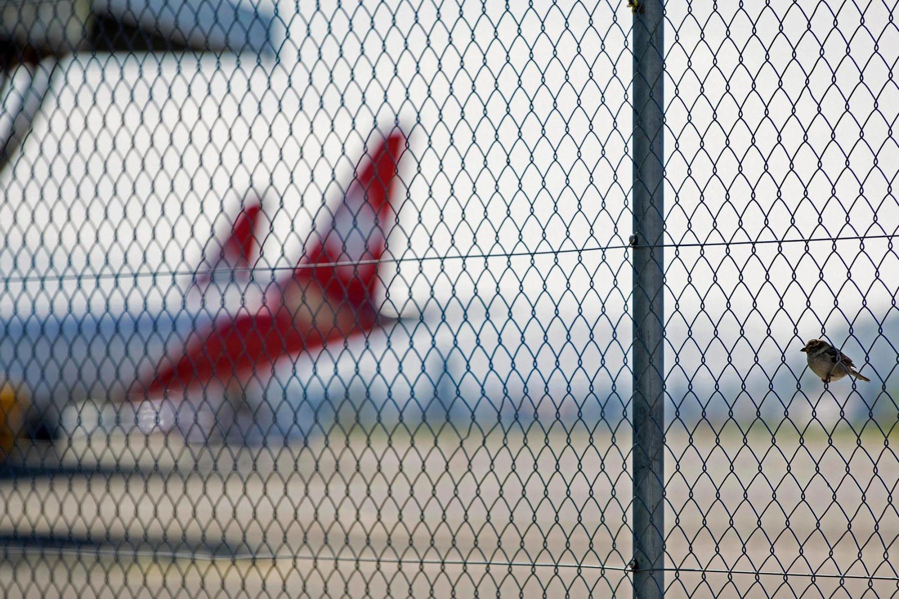 14.4.2020 in Belp. Ein Spatz sitzt auf einem Maschendrahtzaun beim Flughafen Bern. Es gab kaum noch Flugbetrieb und deshalb auch keine Kondensstreifen mehr am Himmel. Foto: Christian Pfander